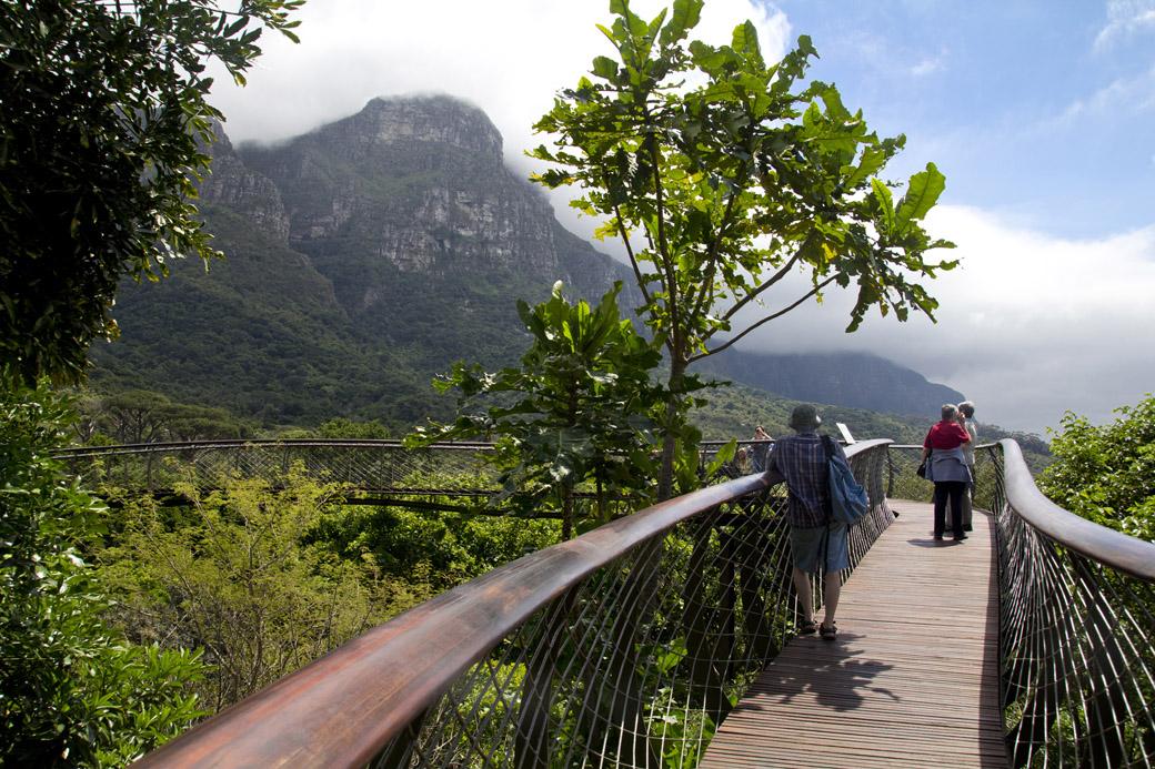 & Kirstenbosch Treetop Canopy Walkway - Tensile Cables